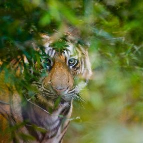 The Jungle Book Live and Safari Adventure, From £99ppBook Now
